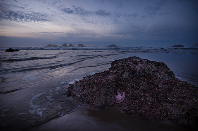 Bandon_Oregon_Coast_starfish_sunset