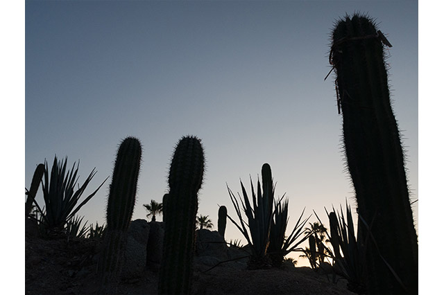 evening in mexico cacti