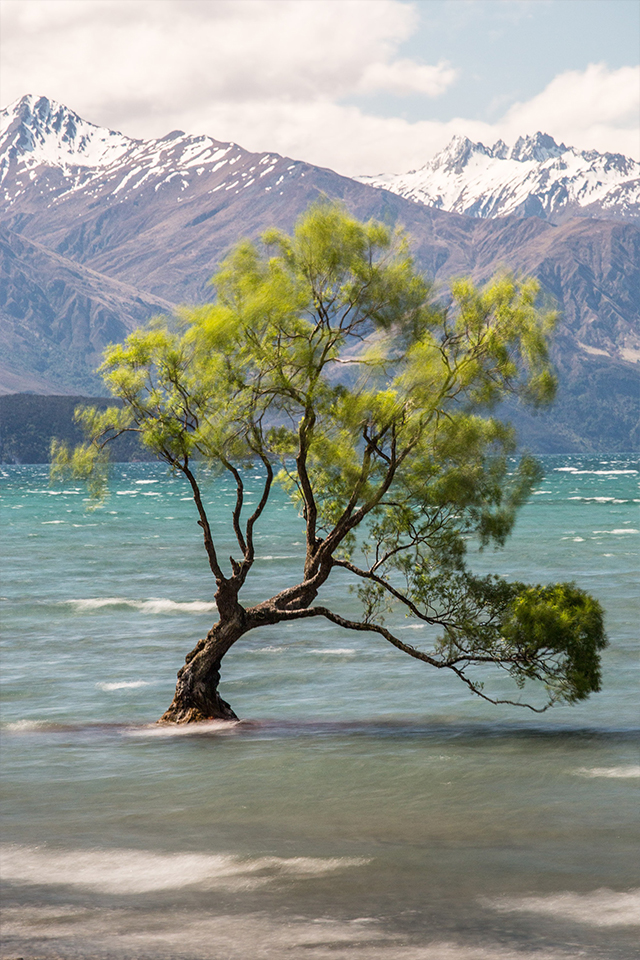 exploring Wanaka and that tree