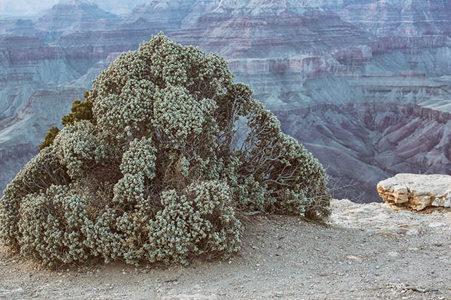 landscape at the Grand Canyon