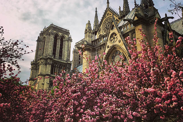 spring blooms in Paris