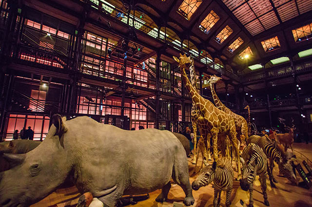 animals in the Natural History Museum in Paris