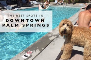 The Best Spots in Downtown Palm Springs