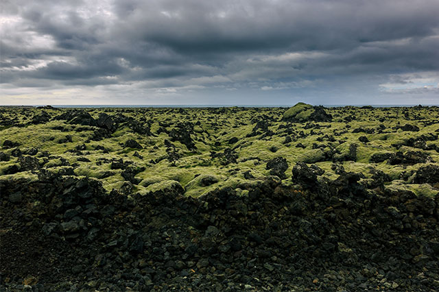 lava rock and moss in Iceland