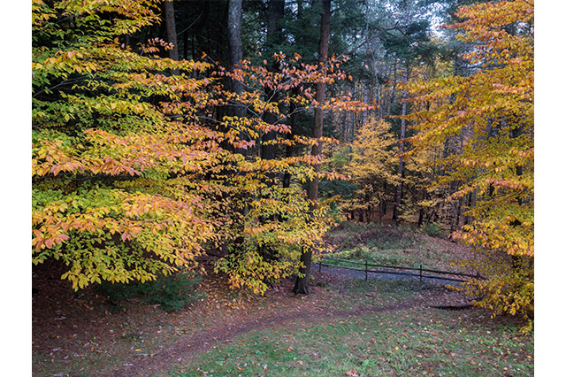 Fall on the Quechee Gorge Trail
