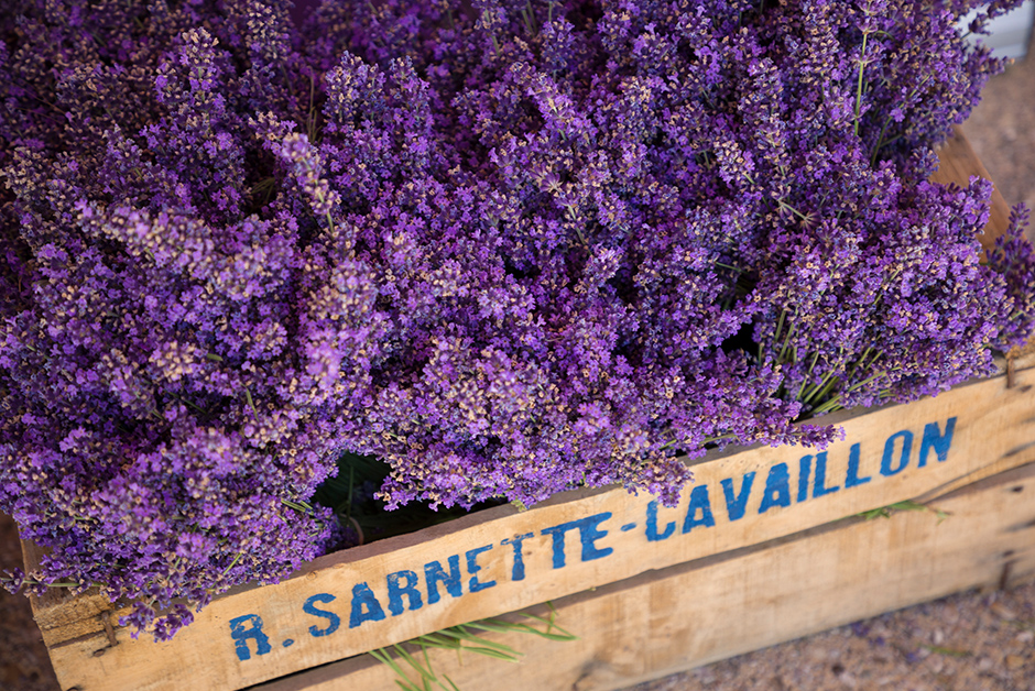 bushels of summer lavender in Provence France