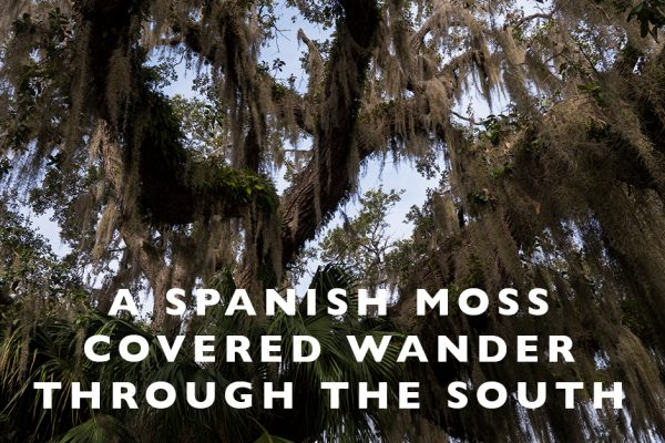 A Spanish Moss Covered Wander through the South : A Video Tour