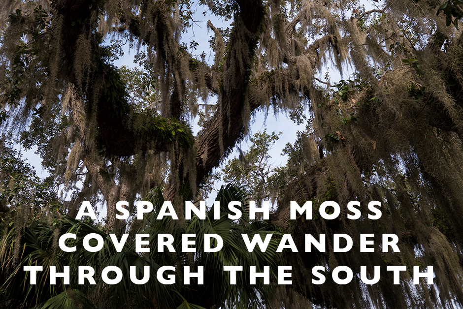 Spanish moss covered wander through the South
