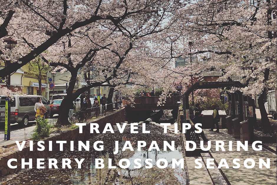tips for visiting Japan During Cherry blossom season