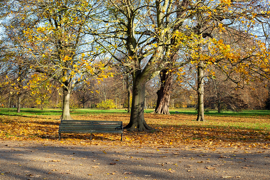 Autumn in London Hyde Park