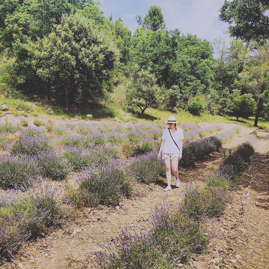 Summer in Provence Gordes lavender