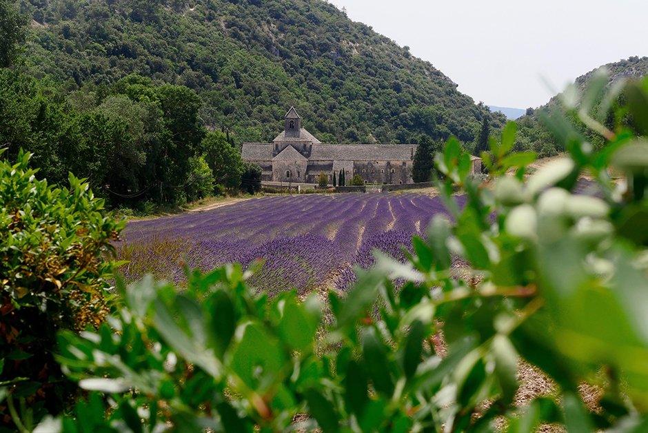 Summer in Provence Gordes lavender semanque abbey