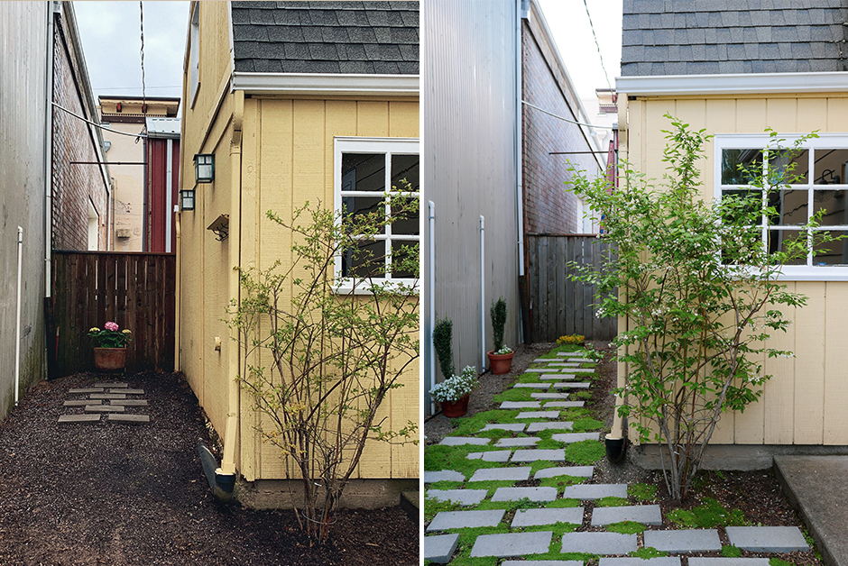 before and after backyard