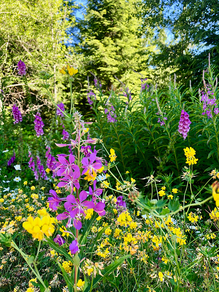 wildflowers on the Olympic Peninsula Washington