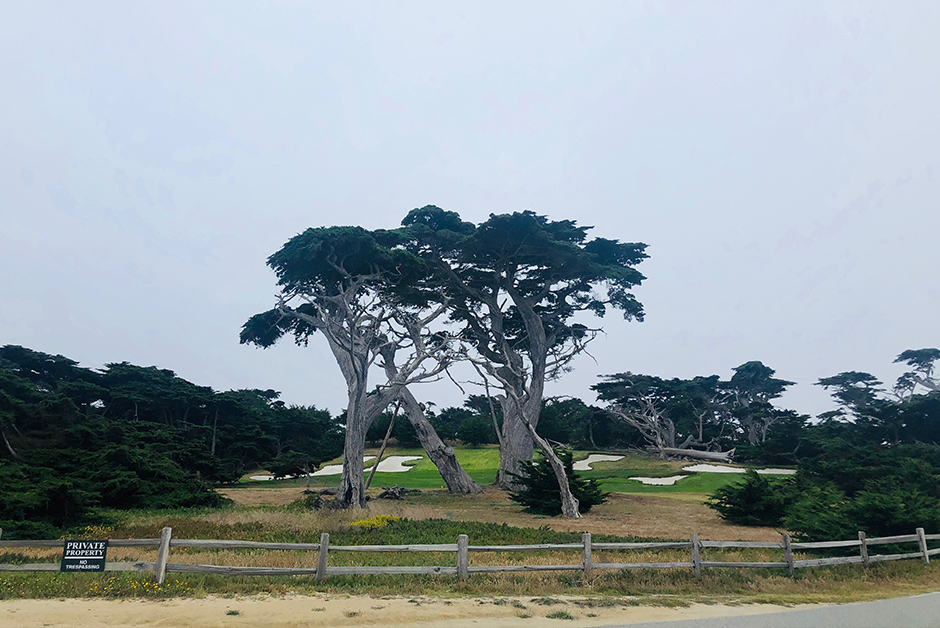 cypress trees 17 mile drive