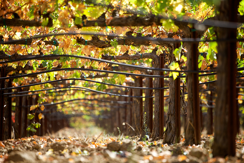 Oregon Wine Country in the Fall