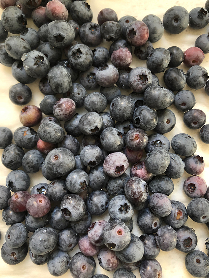growing blueberries in an urban garden